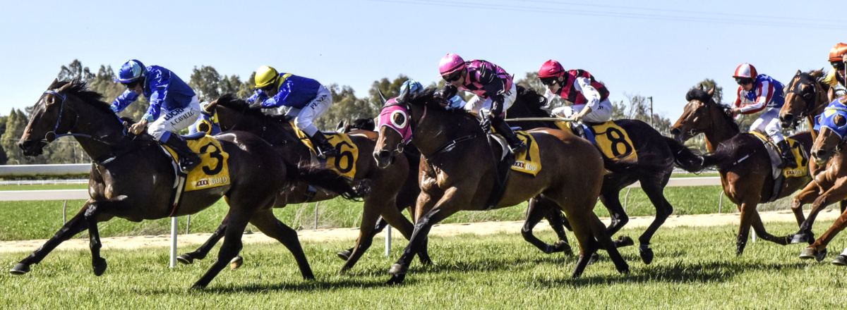 Image result for snake gully cup